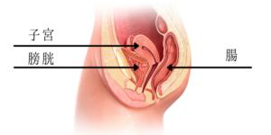 内臓の位置
